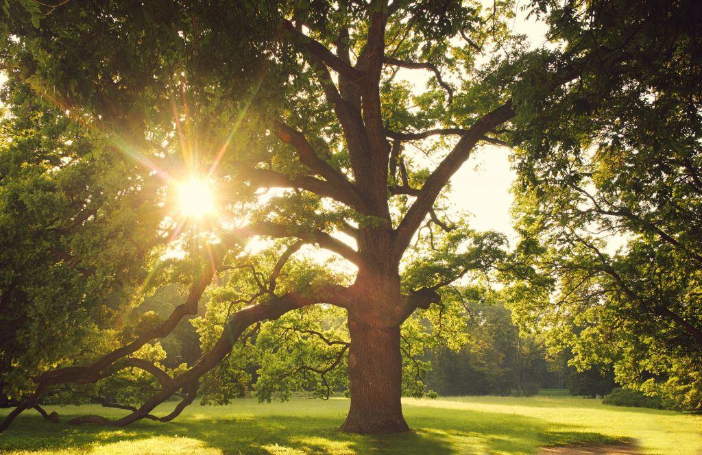 alberi-di-grandi-dimensioni-per-progetti-verdi-scenografici-e41484e9